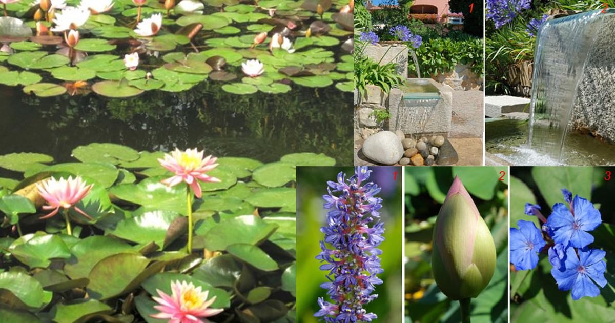 Giardino con laghetto splendore tra ninfee cascatelle e for I fiori della balsamina