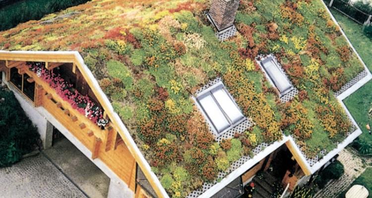 Piante sul tetto fai da te in giardino - Giardino sul tetto ...