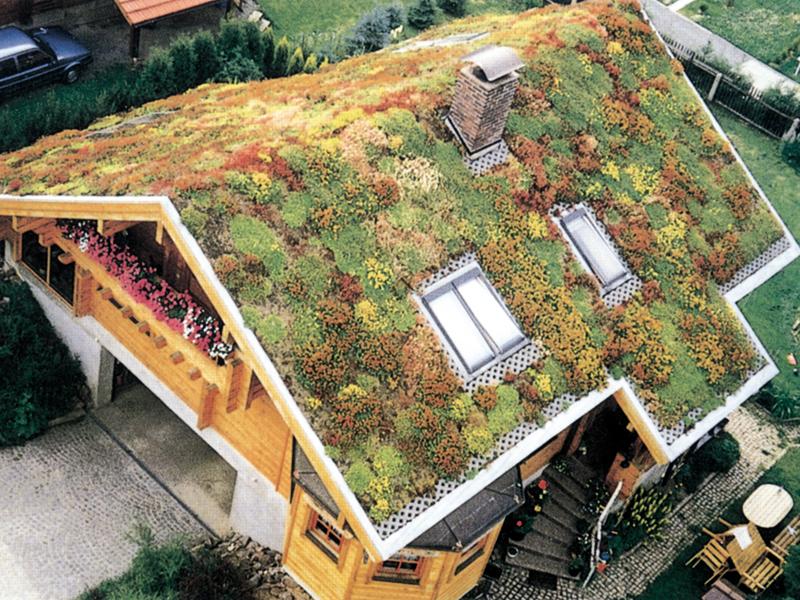 Piante sul tetto fai da te in giardino - Trapianto camelia ...
