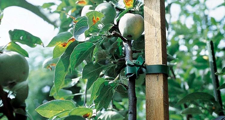 Tutore per piante per crescere diritte reggendo il peso for Prezzi alberi da frutta