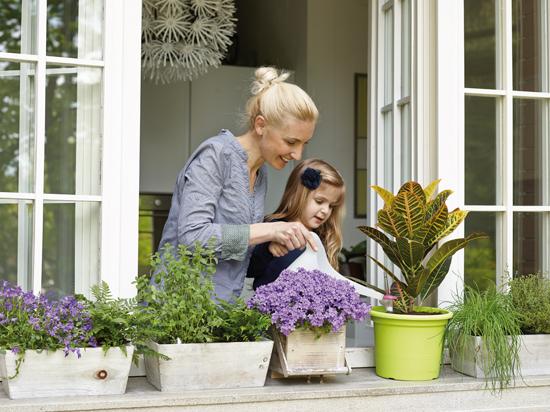 Aquaflora sistema di irrigazione fai da te in giardino for I fiori della balsamina