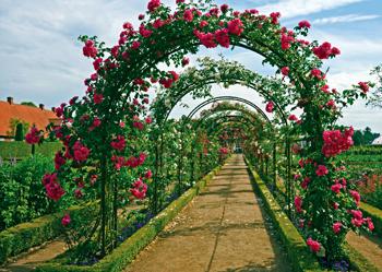 Come coltivare le piante rampicanti fai da te in giardino for Arco per rampicanti fai da te