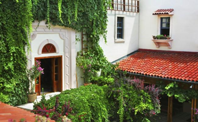 Come coltivare le piante rampicanti fai da te in giardino - Piante rampicanti da esterno ...