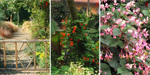 Foto di un cancelletto e altre fioriture