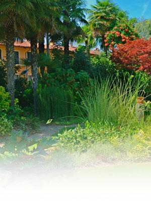foto di uno scorcio del giardino di Domenico