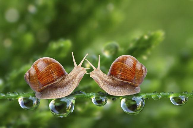 Allevamento lumache fai da te | Guida tecnica per avere successo