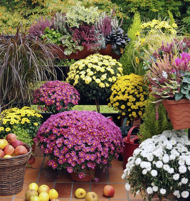 Balconi fioriti e terrazzi fioriti come progettarli in for Cespugli fioriti da giardino