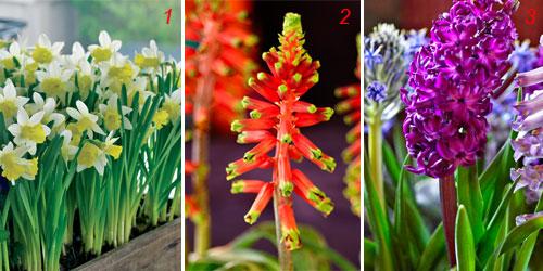foto di fioriture