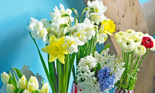 foto di fiori recisi