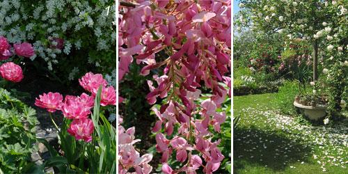 foto di fioriture del giardino di Camilla