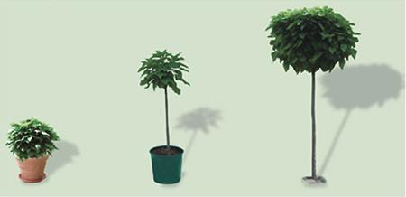 catambra, pianta antizanzare