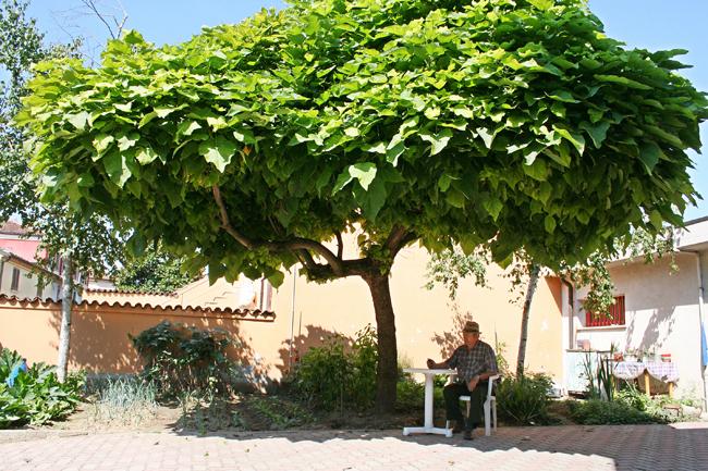 Catambra pianta antizanzare fai da te in giardino for Soluzioni zanzare giardino