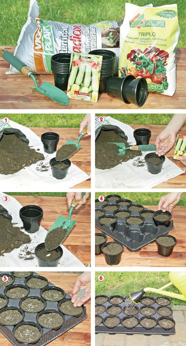 coltivare zucchine, coltivazione zucchine, coltivare le zucchine, zucchina coltivazione, coltivazione delle zucchine, zucchino, zucchini, zucchine