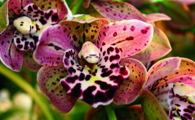 Come curare le orchidee fai da te in giardino - Orchidee da esterno ...