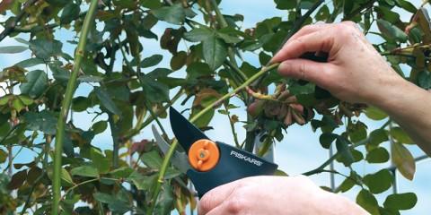 Come potare le rose fiskars for Oleandro riproduzione
