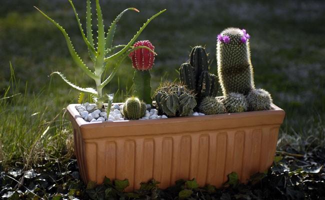Composizioni piante grasse fai da te in giardino for Aiuola piante grasse