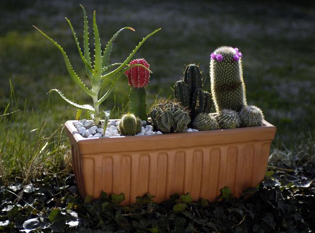 Composizioni piante grasse fai da te in giardino for Piante da aiuola