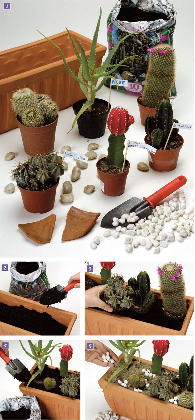 composizioni piante grasse, composizione piante grasse, piante grasse, pianta grassa, succulenta ,piante succulente
