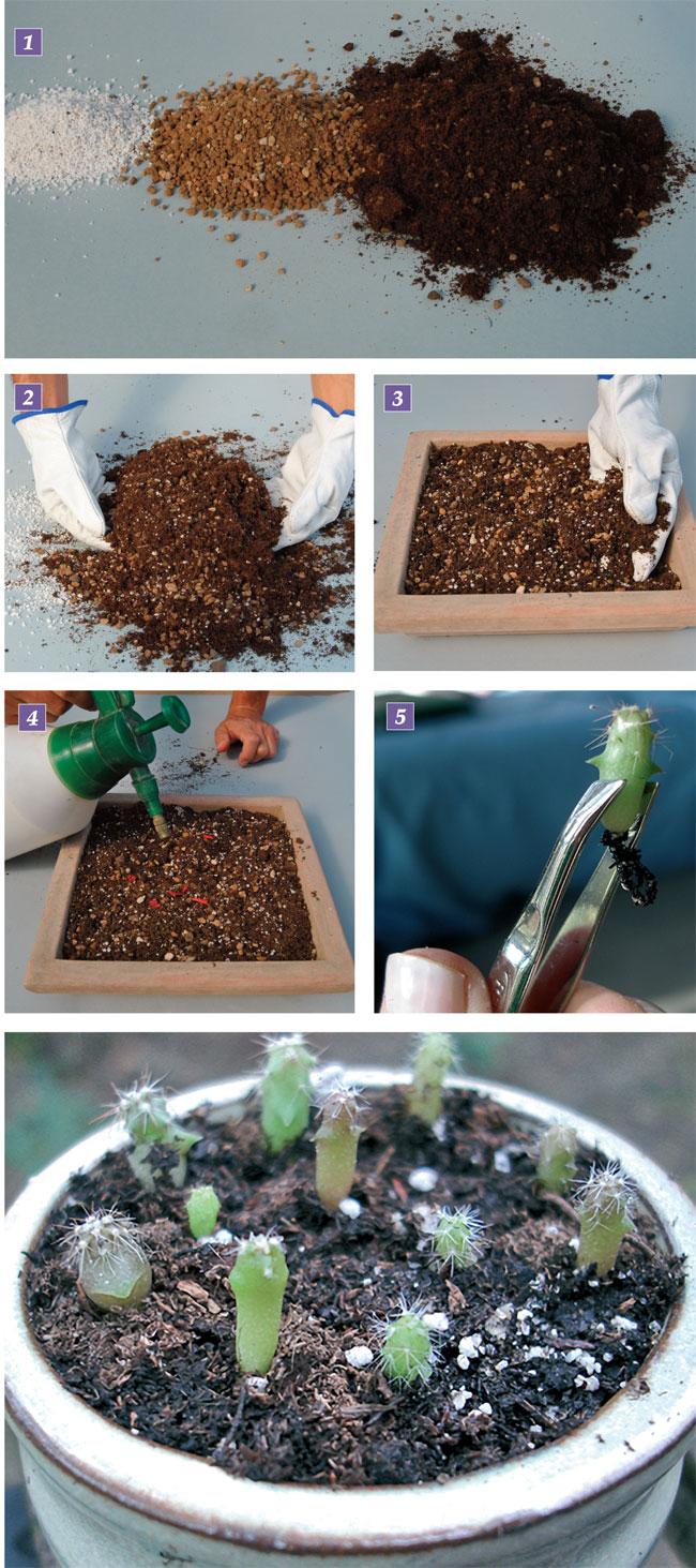Composizioni Piante Grasse Fai Da Te : Composizioni piante grasse fai da te in giardino