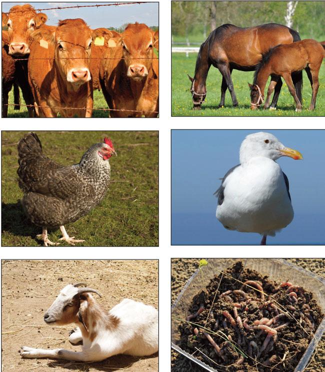 animali che producono concime