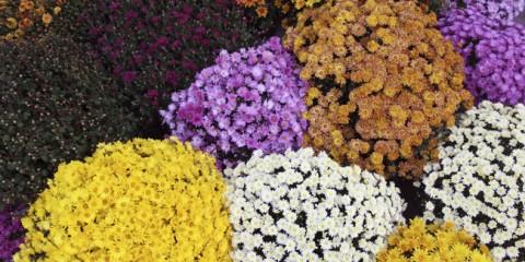 Piante grasse con fiori coltivazione rinvaso e talea for I fiori della balsamina