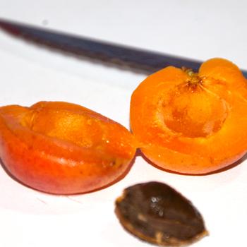 albicocche essiccate