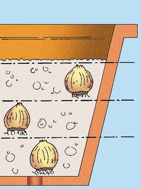 """Per godere di numerose fioriture prolungate nel tempo piantiamo i bulbi di narcisi e giacinti a strati, proprio come un """"sandwich"""". I bulbi si posizionano gli uni sopra gli altri a diverse profondità. Questo consente di sfruttare al massimo lo spazio a disposizione e di cadenzare nel tempo la vegetazione e la fioritura. Le giovani piante non avranno difficoltà a farsi strada nel terreno."""