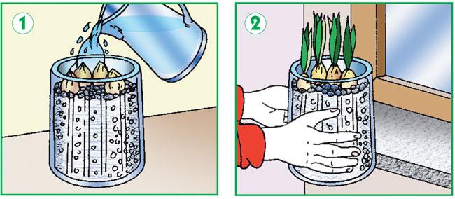 Come coltivare i giacinti fai da te in giardino - Bulbi estivi quando piantarli ...