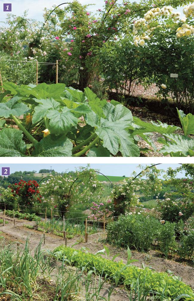 Progettare un giardino a terrazze - Fai da te in giardino