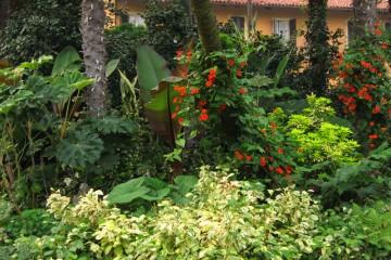 Gardenia pianta molto esigente con fiori bianchi dal - Gardenia pianta da giardino ...