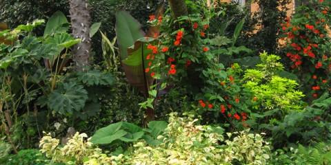 Rinvasare i gerani approfondimento fai da te in giardino - Trapianto camelia ...