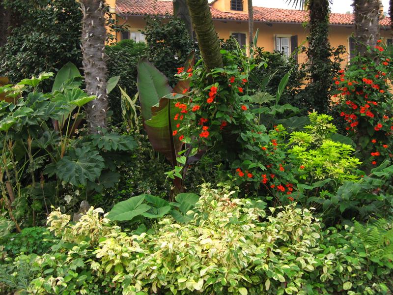Piante esotiche da giardino idee per interni e mobili - Piante tropicali da giardino ...