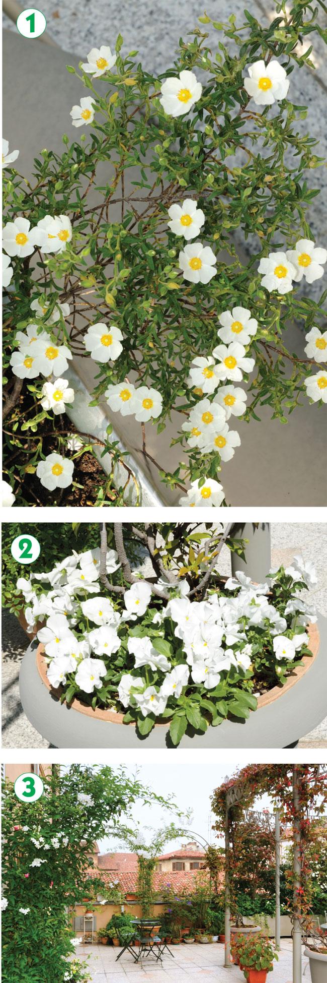 giardino pensile, giardini pensili, giardino in terrazzo, giardino sul terrazzo