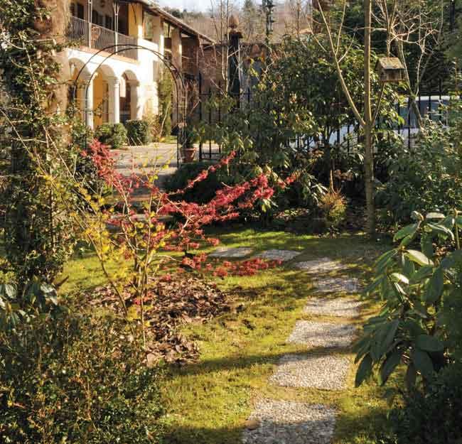 Hamamelis in giardino
