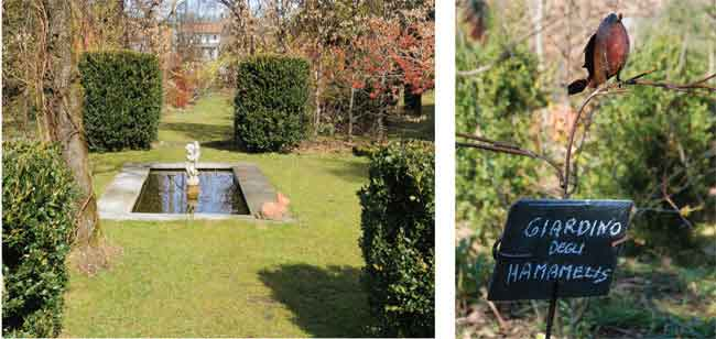 hamamelis, amamelide, amamelidi, Jelena De Belder, coltivare l'hamamelis, pianta hamamelis, cure hamamelis, hamamelis varietà, hamamelis in giardino