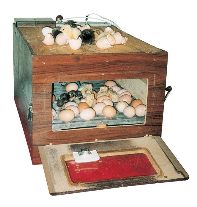 incubatrice per uova