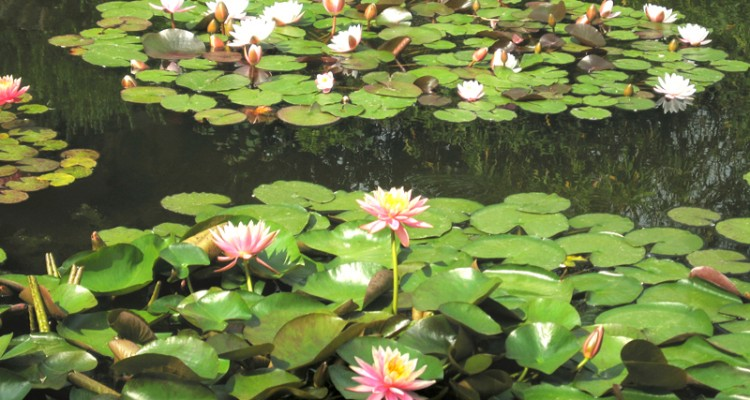 Giardino con laghetto splendore tra ninfee cascatelle e - Laghetti artificiali giardino ...