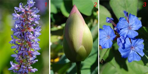 foto di fioriture laghetto di Nando