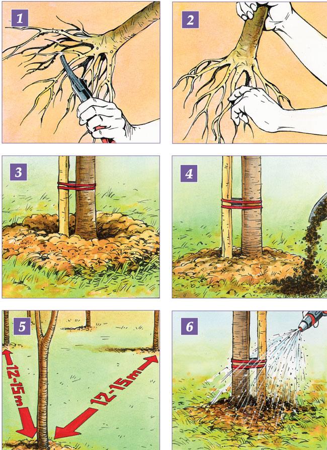 coltivare albero di noci