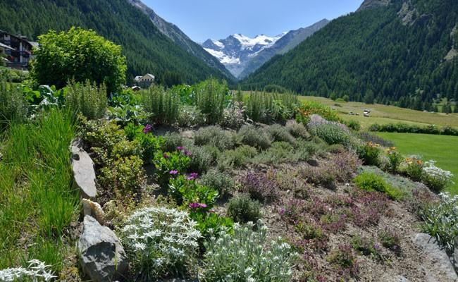 Orti di montagna fai da te in giardino - Giardini di montagna ...