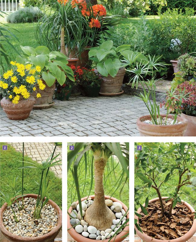 Telo Non Telo Per Piante: Un quadrato di giardino forum giardinaggio.