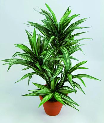 piante antismog 10