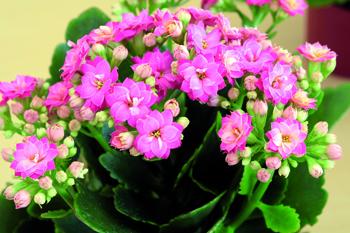 piante antismog