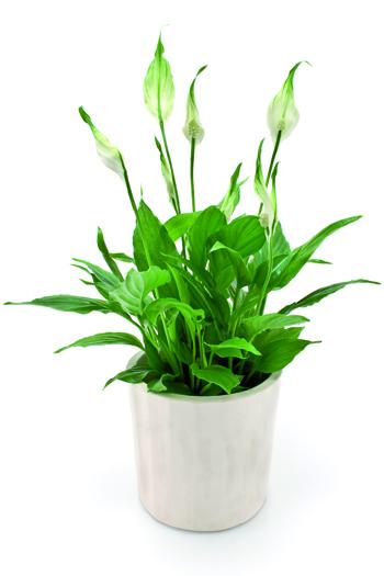 piante antismog 2