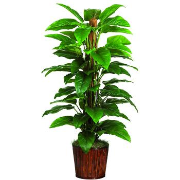 piante antismog 8