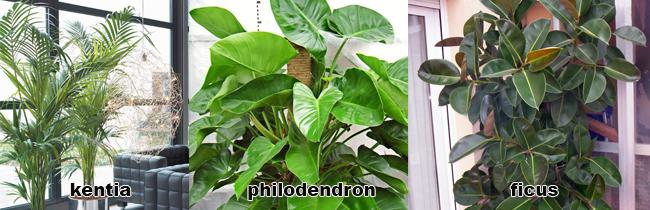 piante da appartamento alte
