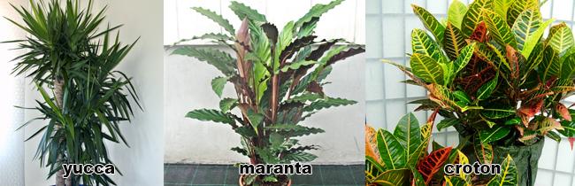 piante alte verdi