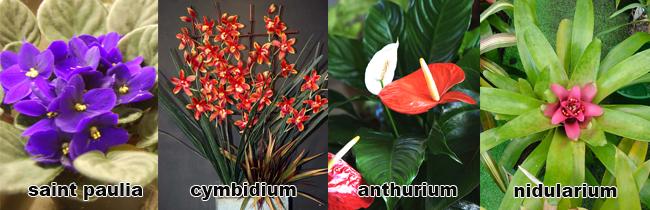 piante da appartamento con fiori