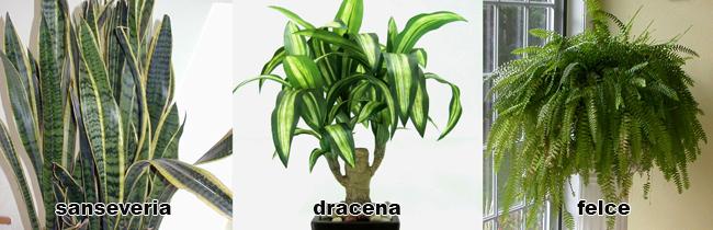 piante da appartamento nomi e variet