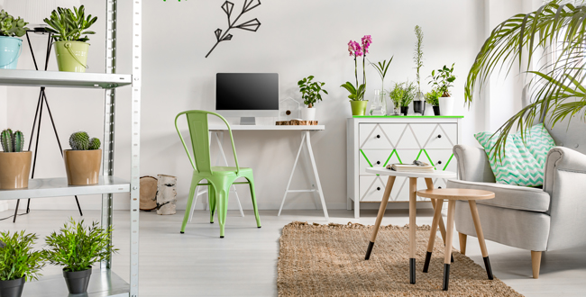 Piante da appartamento nomi e variet for Piante e fiori da appartamento